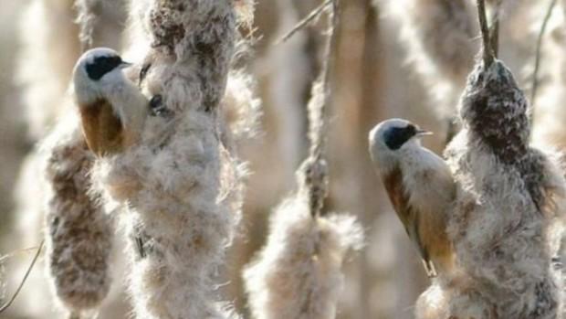 رصد طائر نادر في محمية غلوستر للحياة البرية    7-89-620x349