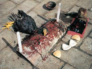 Világ Vége (Másik Világ 3) Santeria_chicken_sacrifice