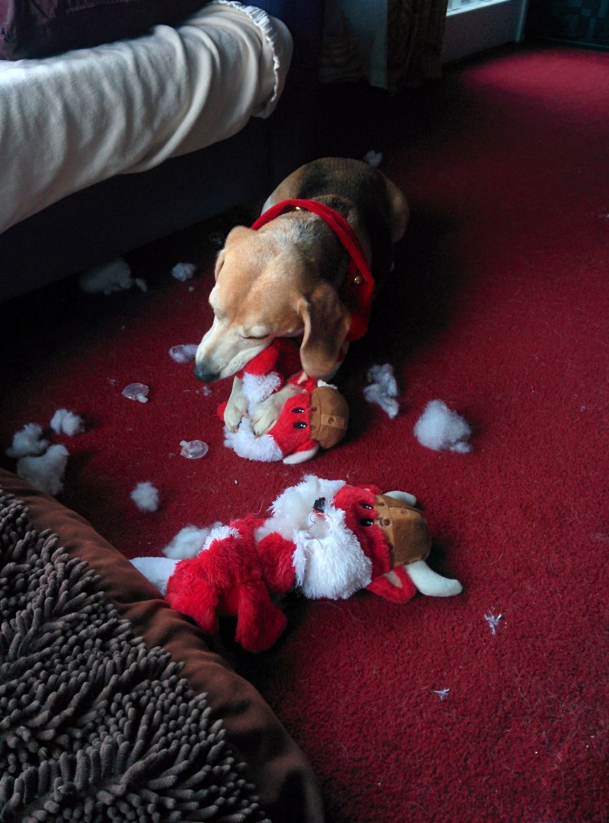 27 Dogs and Cats That Destroyed Christmas IMG_20141214_201820__880