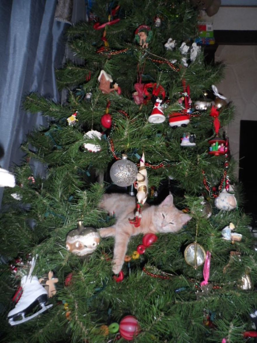 27 Dogs and Cats That Destroyed Christmas SAM_3369__700