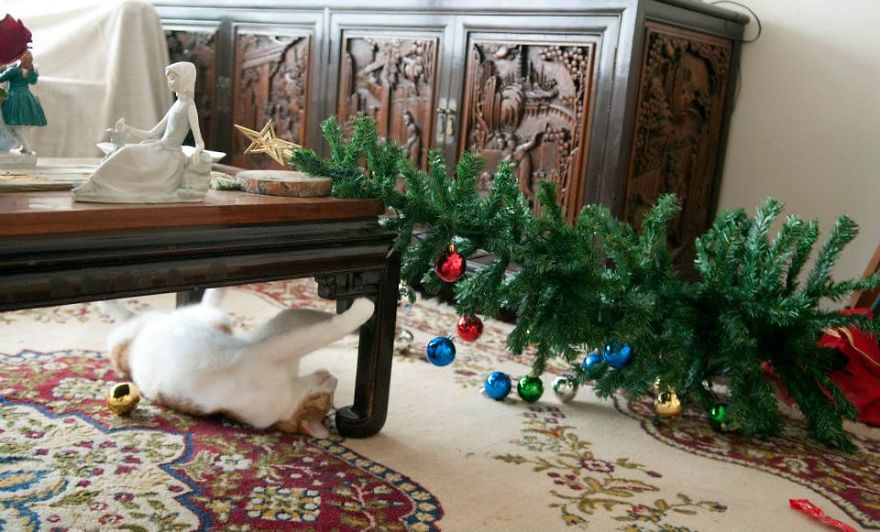 27 Dogs and Cats That Destroyed Christmas Search-and-Destroy2__880