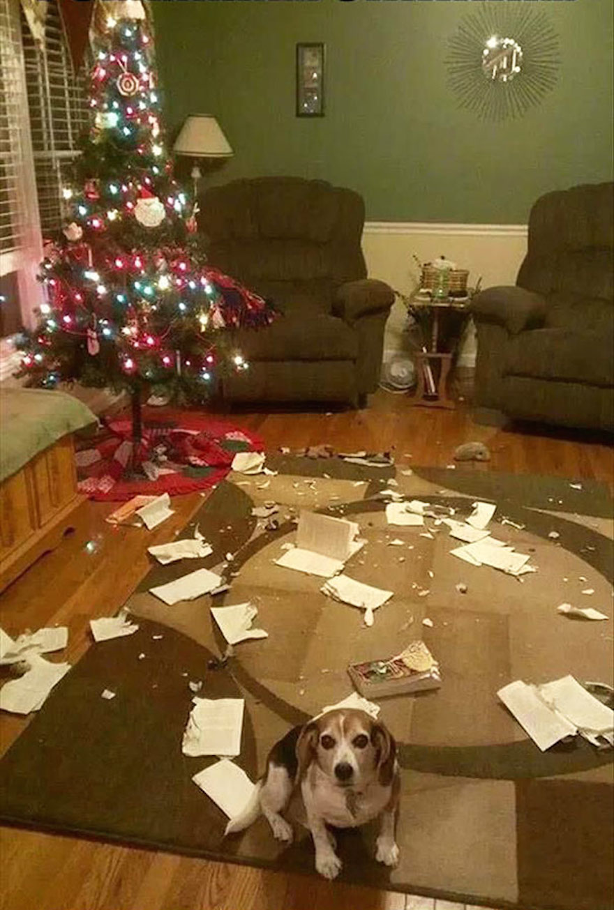 27 Dogs and Cats That Destroyed Christmas XX-animals-destroying-Christmas-10__605
