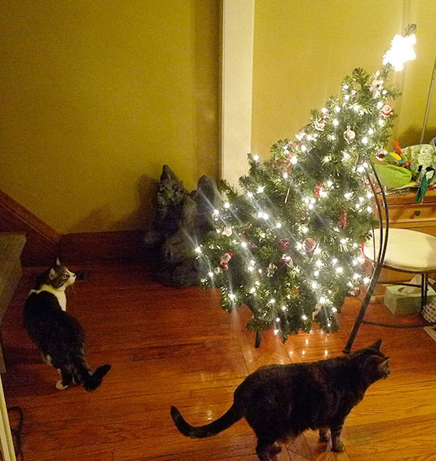 27 Dogs and Cats That Destroyed Christmas XX-animals-destroying-Christmas-15__605