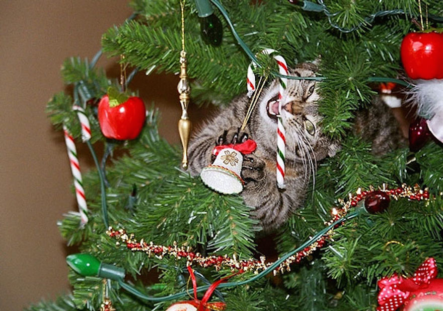 27 Dogs and Cats That Destroyed Christmas XX-animals-destroying-Christmas-16__605
