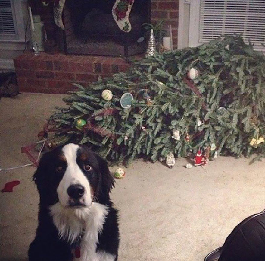 27 Dogs and Cats That Destroyed Christmas XX-animals-destroying-Christmas-1__605