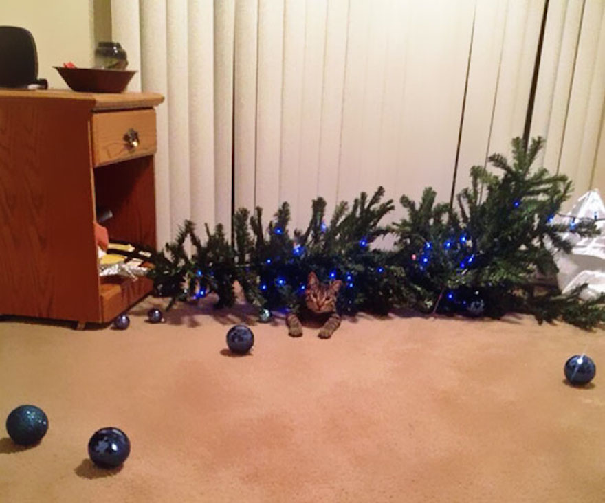 27 Dogs and Cats That Destroyed Christmas XX-animals-destroying-Christmas-2__605