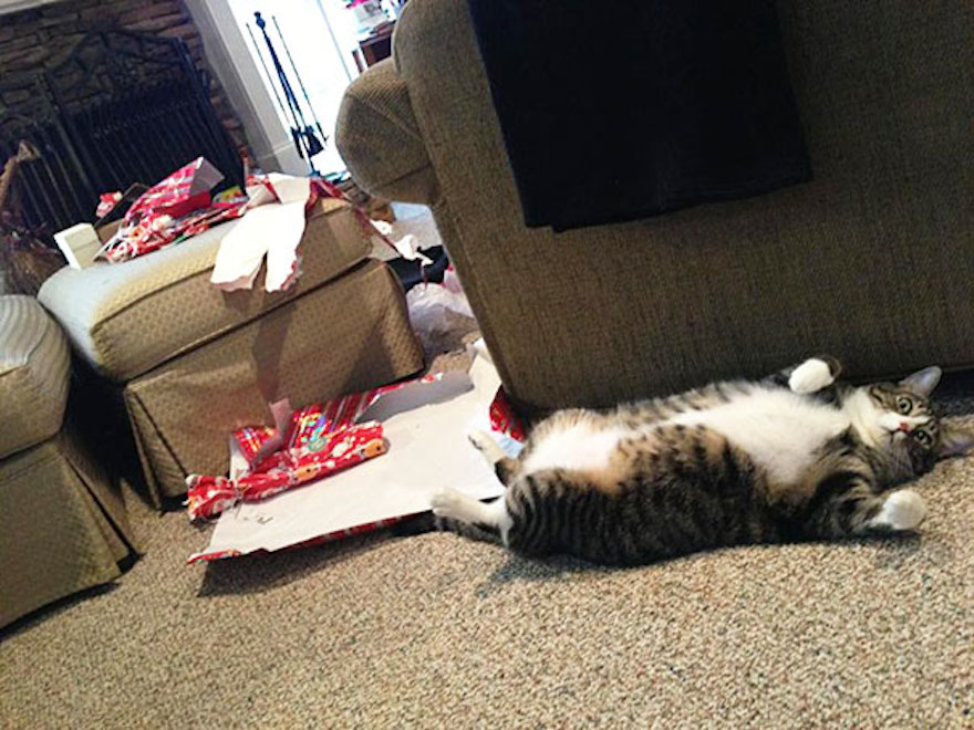 27 Dogs and Cats That Destroyed Christmas XX-animals-destroying-Christmas-6__605