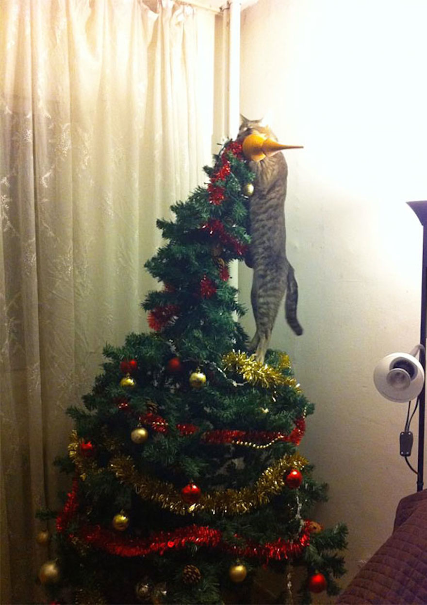 27 Dogs and Cats That Destroyed Christmas Animals-destroying-christmas-cat-on-christmas-tree__605