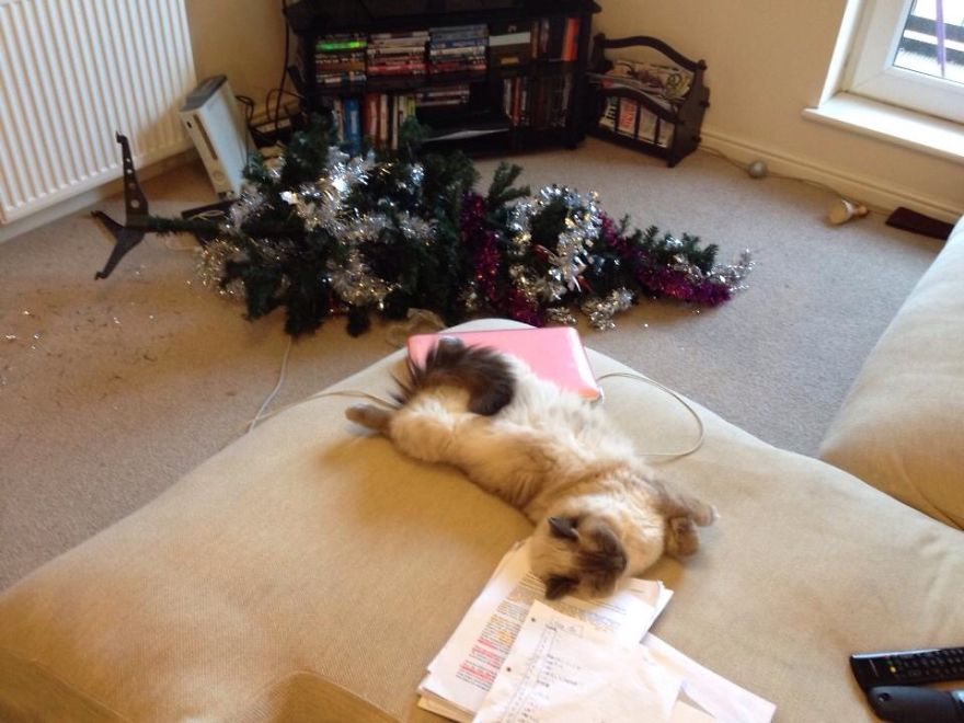 27 Dogs and Cats That Destroyed Christmas Image208__880