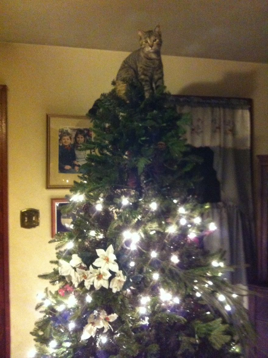 27 Dogs and Cats That Destroyed Christmas Image211__880