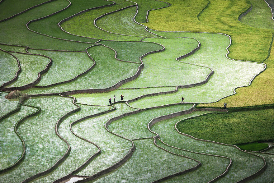 24 Entrancing Rice Fields That Resemble Broken Glass Terraced-rice-fields-12__880