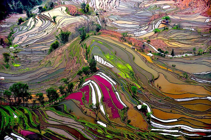 24 Entrancing Rice Fields That Resemble Broken Glass Terraced-rice-fields-2__880