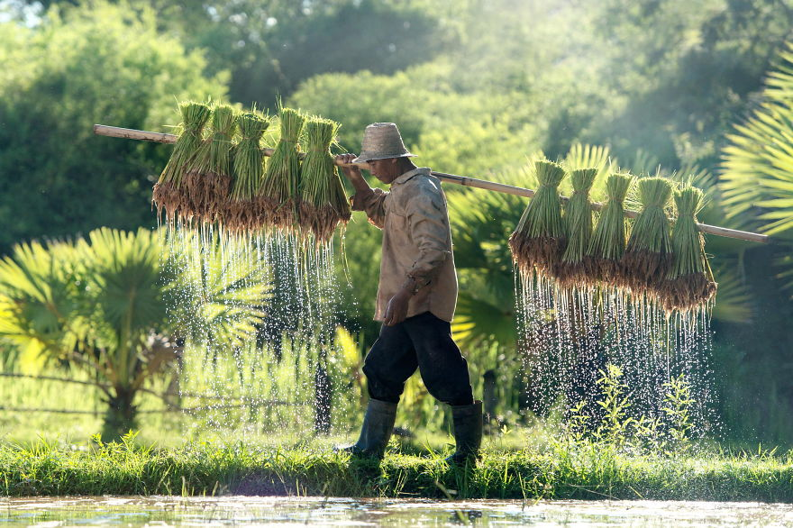 24 Entrancing Rice Fields That Resemble Broken Glass Terraced-rice-fields-32__880