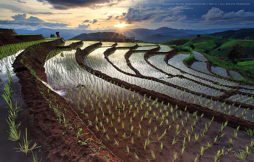 24 Entrancing Rice Fields That Resemble Broken Glass Terraced-rice-fields-6__880
