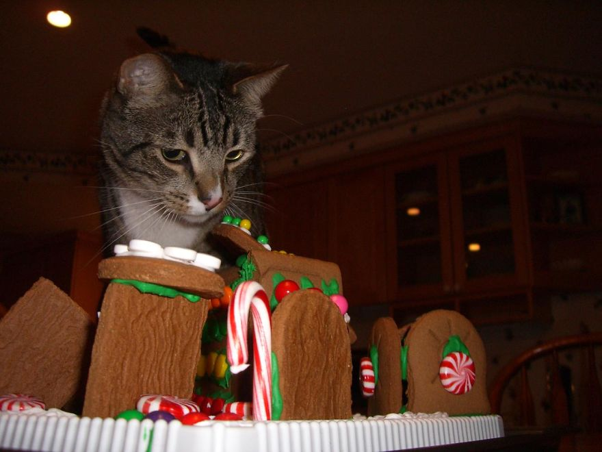 27 Dogs and Cats That Destroyed Christmas Terror-in-gingerbread-town__880