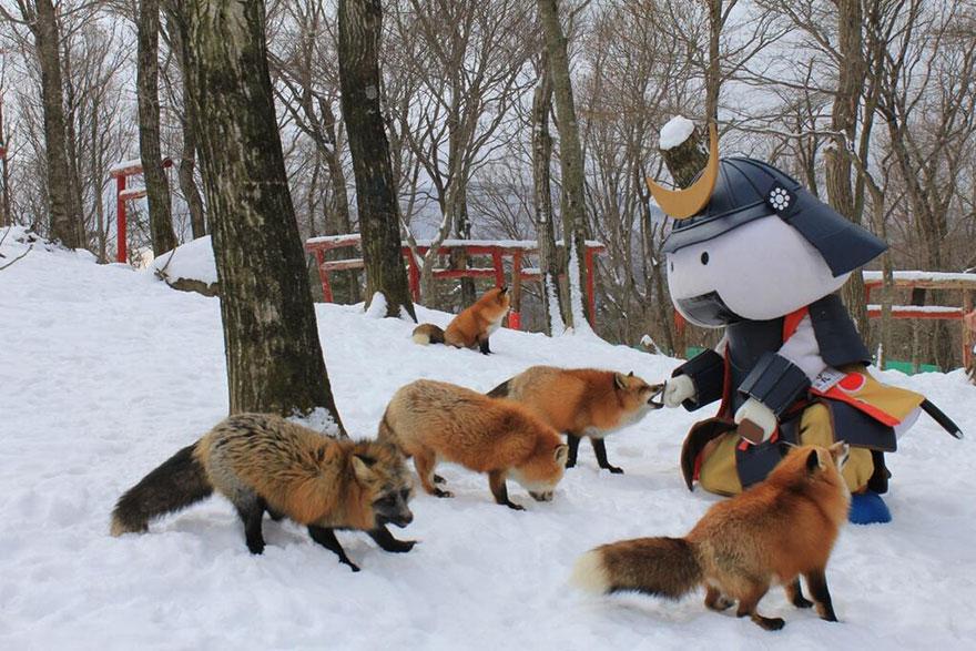 Japan's Fox Village Is The Cutest Place On Earth Zao-fox-village-japan-32