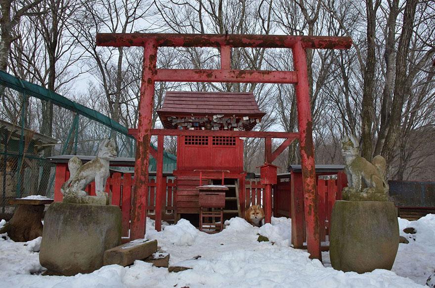 Japan's Fox Village Is The Cutest Place On Earth Zao-fox-village-japan-33