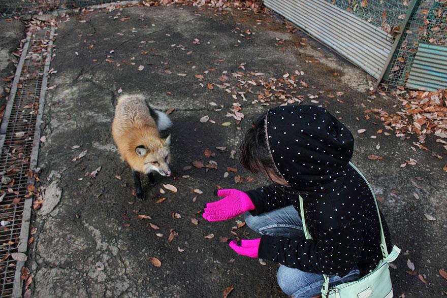 Japan's Fox Village Is The Cutest Place On Earth Zao-fox-village-japan-6