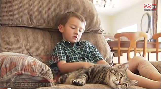 Cat Who Rescued Young Boy Wins Hero Dog Award Boy-cat