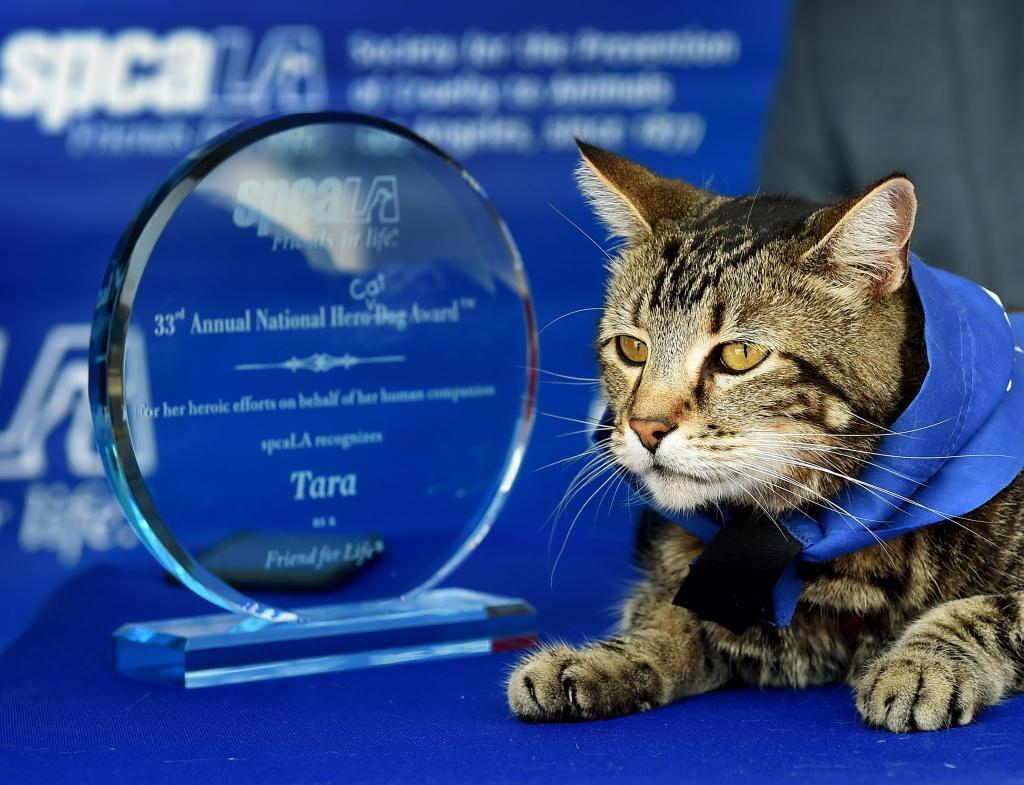 Cat Who Rescued Young Boy Wins Hero Dog Award Cat-dog-hero
