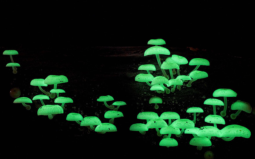 Enter A Magical World Full Of Australian Mushrooms By Steve Axford Mushroom-photography-steve-axford-610