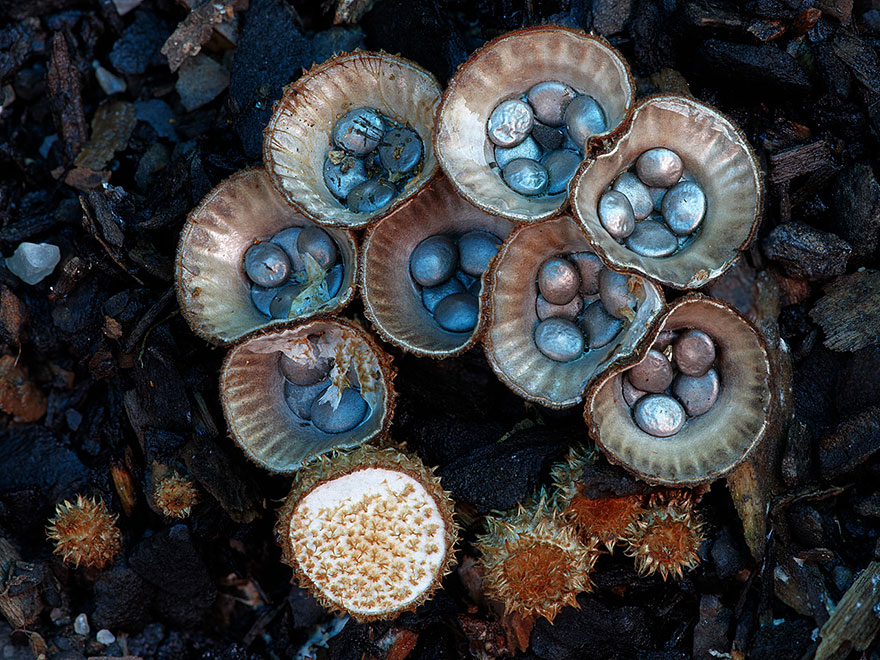Enter A Magical World Full Of Australian Mushrooms By Steve Axford Mushroom-photography-steve-axford-710