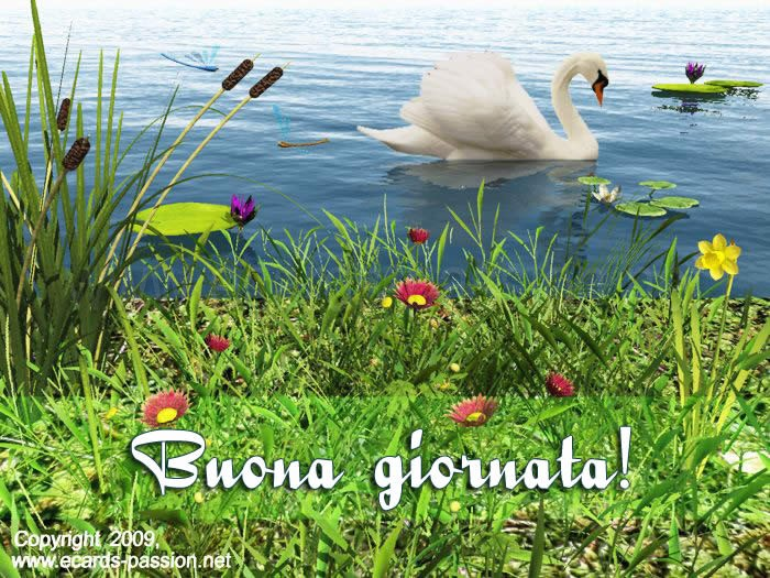 Mercredi 11 août. Swan-nice-day-italiano-2