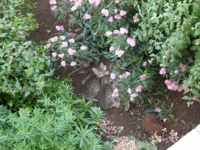 C'est le printemps dans le jardin ! P1020822