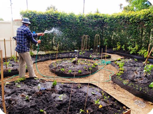 La permaculture renverse les dogmes de l'agronomie  traditionnelle Permaculture1