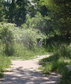 Spatiu verde neingrijit in mijlocul Hunedoarei Spatiu-verde2