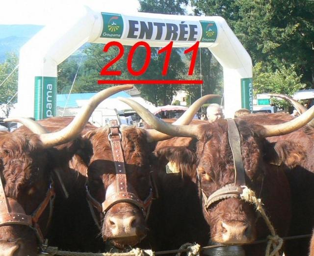 Vaches et Elevage Salers en Livradois 1293376541d7ocsg