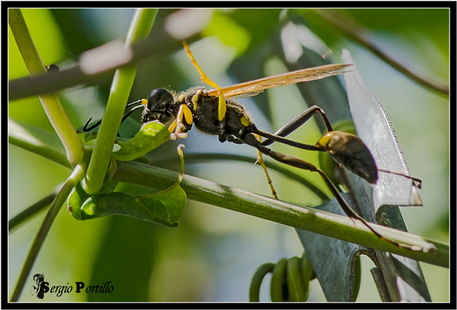 Bộ sưu tập côn trùng 2 - Page 5 Ecpregistro