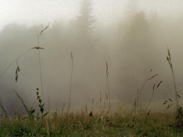 Vers un long nuage blanc... - Page 4 Brouillard