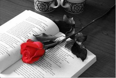 FELICES FIESTAS - Página 4 Rosa_y_libro
