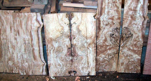 Wood porn Spalted_Maple_13