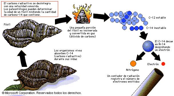 Sobre la prueba del Carbono 14... Carbono