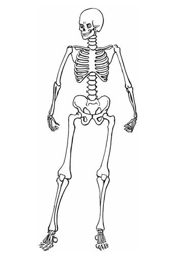 Jeu des images - Page 4 Squelette-t8910