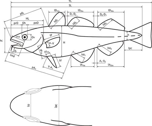 [Article] Mesurer un poisson Art-05-fig2