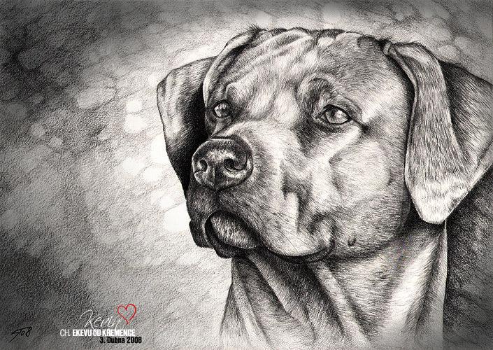 Grafika,crtež...  2008_04_Kresba_BIG