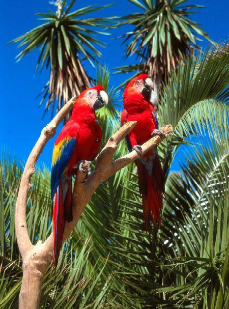 AVES DEL MUNDO... - Página 20 Parrots_Marineland%20Mallorca