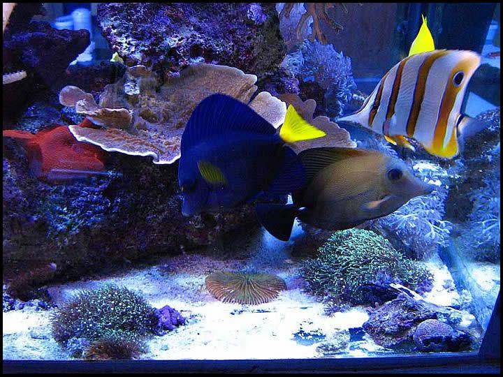 Ribice i ribe slike Ribe1