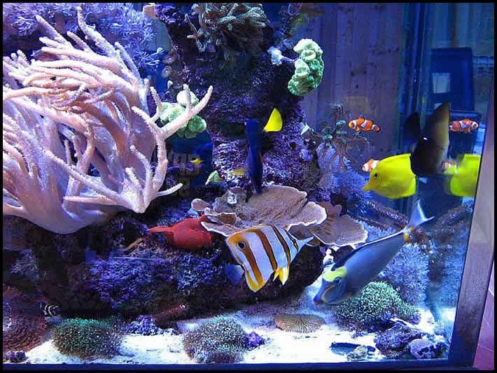 Ribice i ribe slike Ribe2