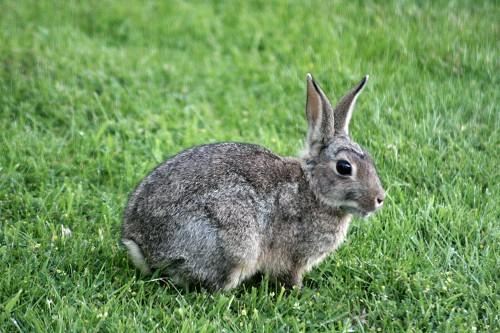 Le 14 Février c'est la St Valentin et la journée du chrono Rabbit-1