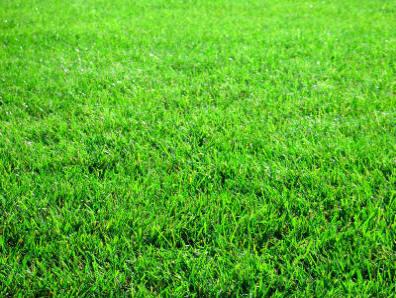 Volim zeleno - Page 2 Grass2