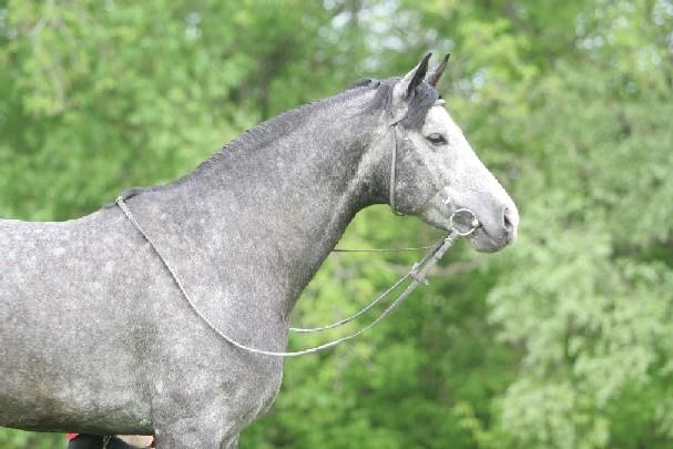 Death_on_horse parduodami zirgai 2dc9e2de