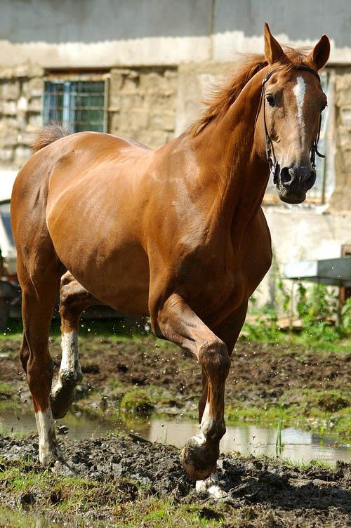 Death_on_horse parduodami zirgai 9d2fb68e
