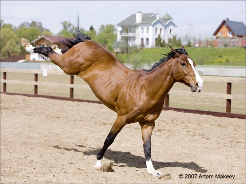 Death_on_horse parduodami zirgai A_3d131f
