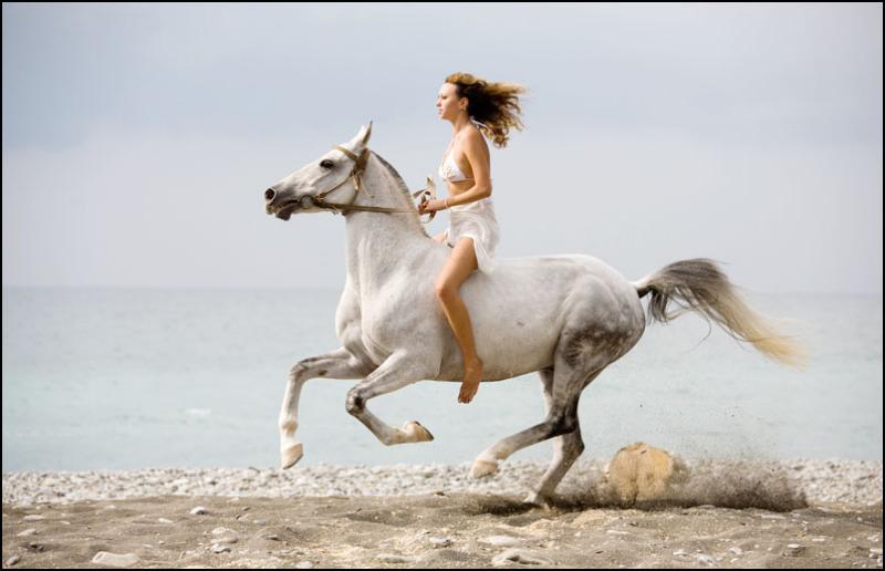 Death_on_horse parduodami zirgai A_4002dc