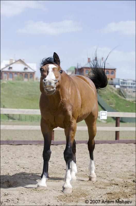 Death_on_horse parduodami zirgai A_4f7056