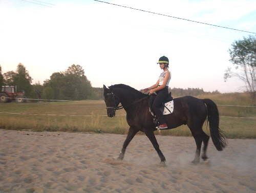 Death_on_horse parduodami zirgai A_5230ae